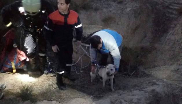 El perro atrapado en el pozo, ya en tierra tras ser rescatado por un bombero en Corella.