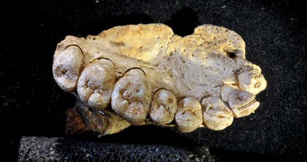 Imagen de la mandíbula de Homo Sapiens encontrada en una cueva de Israel.