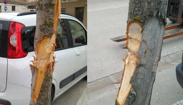 Dos de los árboles afectados