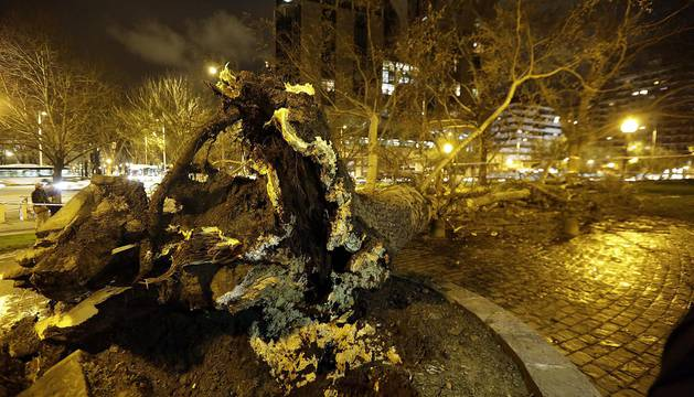 Dos personas resultaron heridas este lunes por la tarde en Pamplona al caerles encima un árbol en la Vuelta del Castillo de Pamplona, el situado en la confluencia de la Avenida del Ejército y Pío XII.