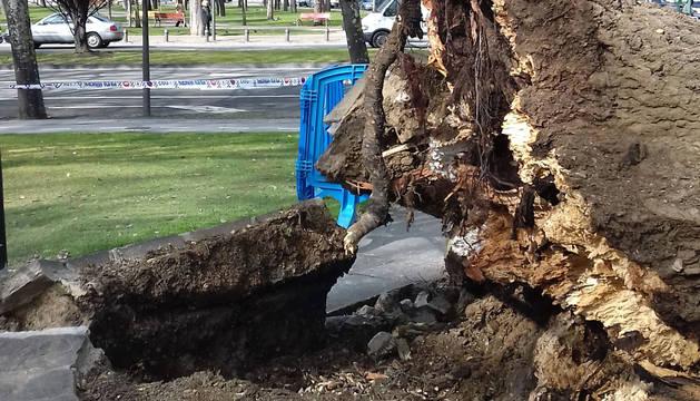 Caída de un árbol en la Vuelta del Castillo de Pamplona