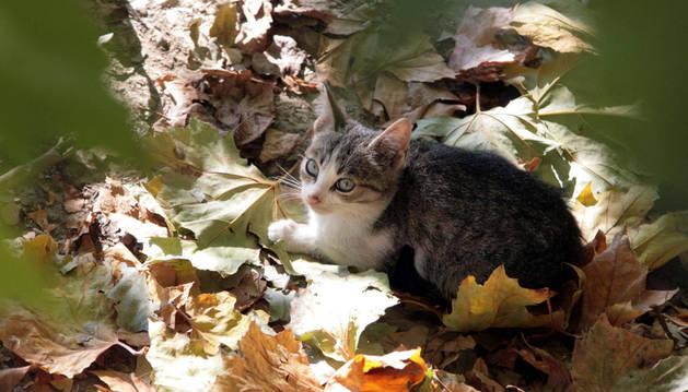 Imagen de un gato en Pamplona.