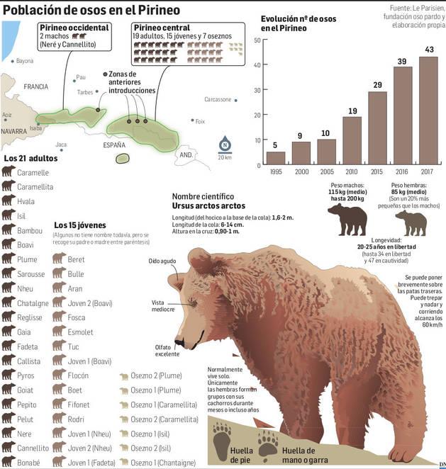 Población de osos en el Pirineo.