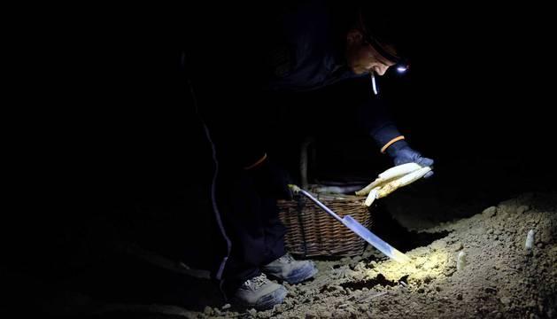 15 personas, 13 adultos y dos menores, se desplazan desde hace veinte años de Jódar a Uterga para trabajar en la campaña del espárrago