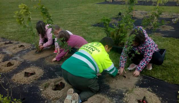 Esta iniciativa se enmarca en el proyecto 'Jardines de Biodiversidad'