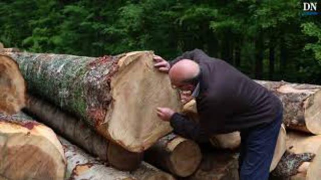 El transporte de la madera desde los montes de Irati por tierra, agua y aire