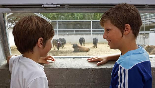 Los corralillos del Gas se llenan de curiosos que se acercan para ver a los toros que estos Sanfermines 2018 correrán los encierros para después ser toreados en la Meca de Pamplona