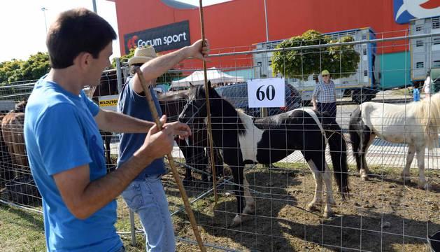Una parcela municipal en el polígono de Agustinos ha vuelto a acoger la feria el 7 de julio, desde las 7 y hasta las 15 horas. 56 ganaderos han participado en la edición de 2018 de la feria de ganado equino de San Fermín con la presencia de más de 500 animales.