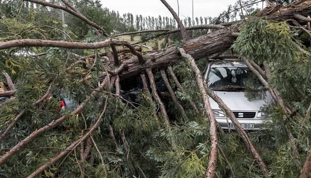Varios heridos tras la caída de un árbol en la Universidad de Navarra