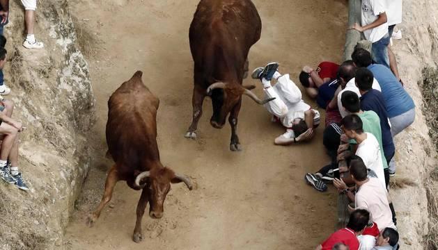 Corredores y vacas bravas se han encontrardo este domingo en escarpada cuesta por la que transcurre el encierro del Pilón de Falces.