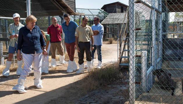 El presidente del Gobierno, Pedro Sánchez, y la canciller alemana, Angela Merkel, han conocido de cerca el trabajo para la recuperación del lince ibérico en el centro de El Acebuche.
