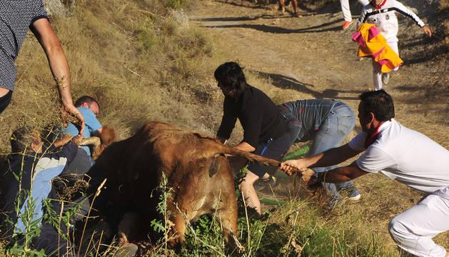 """Emilio Ramos, pastor: """"La vaca fue directamente a por él"""""""