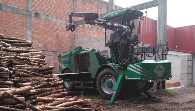 Madera para ser aprovechada como biomasa.
