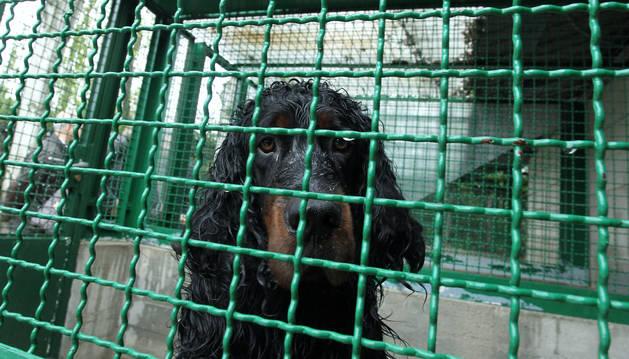 Foto de un perro en el Lazareto municipal.