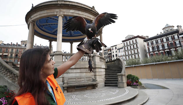 Pamplona suelta en la plaza del Castillo águilas y halcones para espantar a las palomas