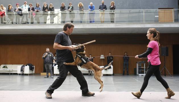 Exhibición de perros para protección de víctimas de violencia machista, en 2015 en el Parlamento