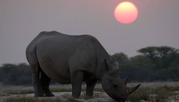 foto de Un rinoceronte negro en África.