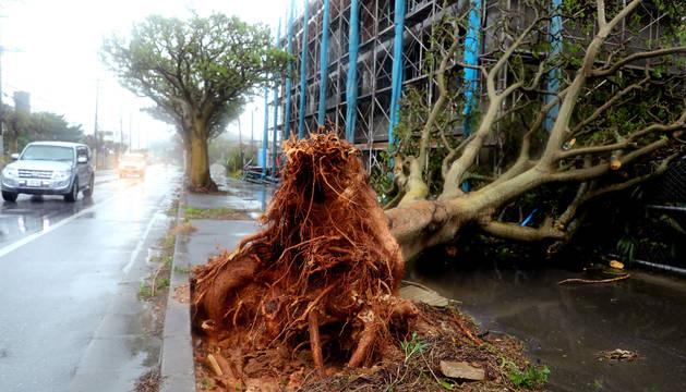 Un coche circula al lado de un árbol roto por los fuertes vientos del tifón Trami.