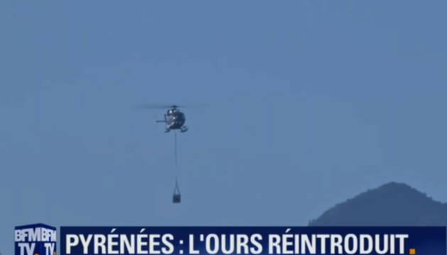 El canal frances BFM TV se hizo eco de la suelta en Aspe. En la imagen, el helicóptero que trasladó a la osa.