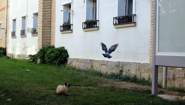 foto de Basta dar una vuelta con cautela para ver a estos animales pululando por la zona.