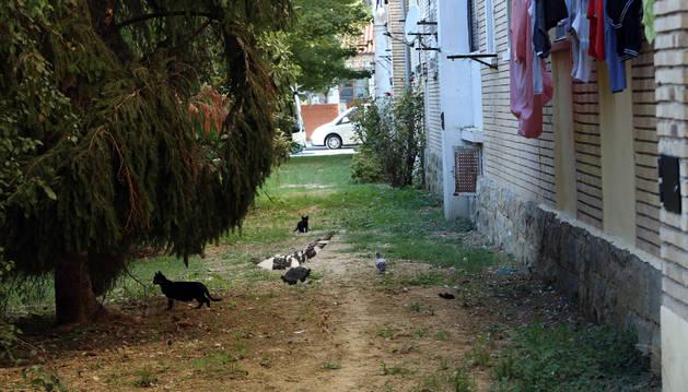 Gatos y palomas en un patio interior de un bloque de viviendas del barrio de la Txantrea.