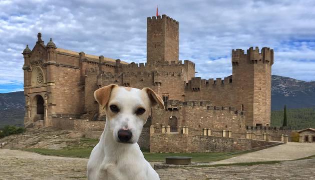 'Pipper' posa orgulloso ante el Castillo de Javier, uno de los primeros sitios que visita en Navarra.