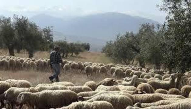 El pastor desconectado