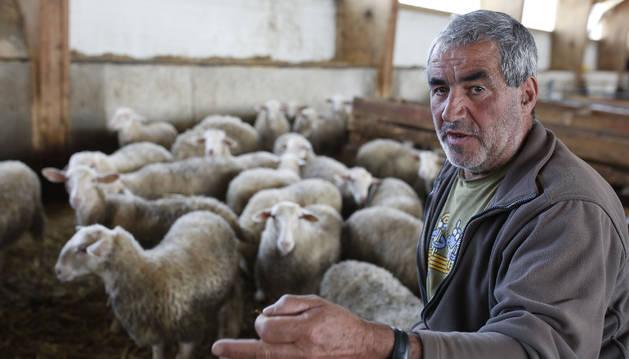 El ganadero de Uztárroz Javier Marco Induráin, con sus ovejas.
