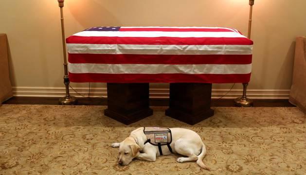 Imagen del labrado Sully, junto al ataúd del expresidente George H.W. Bush .