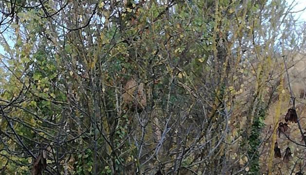 Vista de uno de los seis nidos que pueden observarse fácilmente.