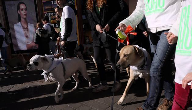 Los perros corren con sus dueños en la 'Sanperrestre' de Madrid.