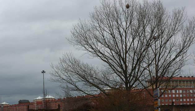 Los nidos que pueden verse estos días por Pamplona debido a 'desnudez' de los árboles ponen en sobre aviso a vecinos y concejales.