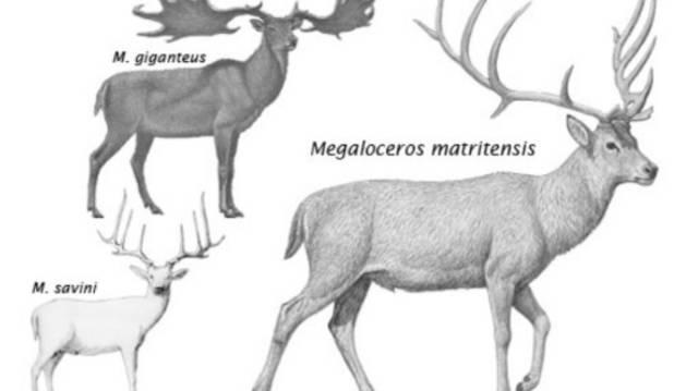 Una nueva especie de ciervo gigante enano poblaba el valle del río Manzanares hace 400.000 años.