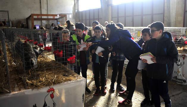 El certamen avícola reúne 480 animales en el ferial de Tafalla