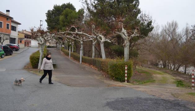 Una mujer pasea con su perro junto a una de las tres bajadas al Bosquecillo de Andosilla.