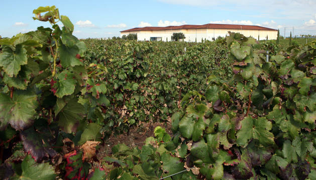 Príncipe de Viana impulsa un proyecto para mejorar la eficacia del viñedo