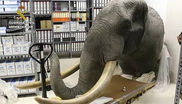Cae una red de comercio ilegal de especies protegidas