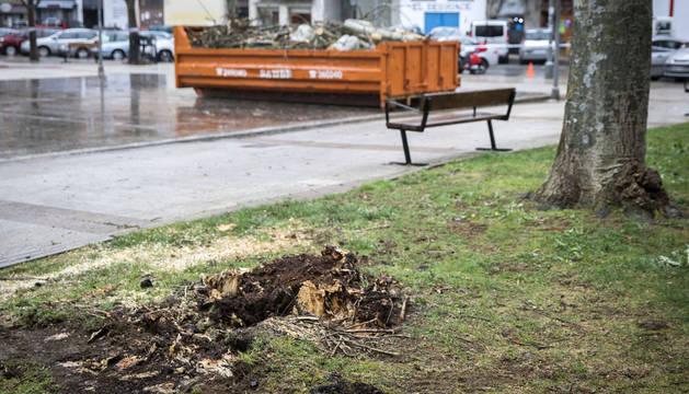 El fuerte viento provoca la caída de ramas en Pamplona y Barañáin