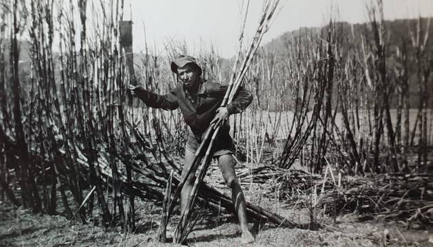 Pedro Garcés, en plena labor de corte de caña de azúcar en una explotación australiana.