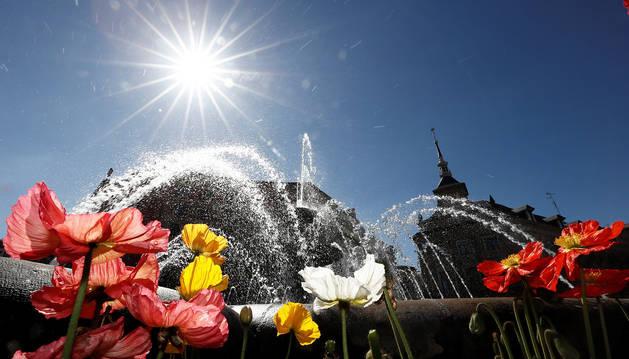 Jornada soleada con flores en una fuente de Pamplona.