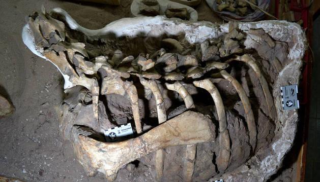foto de Carcasa del dinosaurio Mahuidarcursor descubierto en Argentina