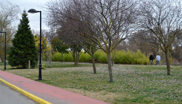 Paseo del Medianil de Lodosa, a orillas del Ebro.