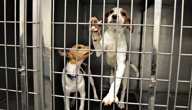 Estos dos perros esperaban su adopción el pasado mes de diciembre en el lazareto de Pamplona.
