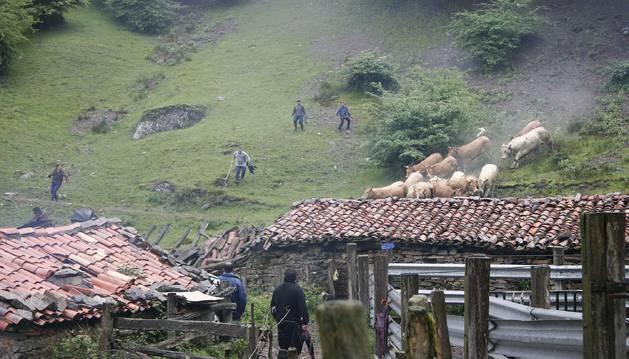 Foto de la imagen recoge una jornada de marcaje de ganado liberado en el paraje de Erdiz, parte del cual se incluye en Erregerena.