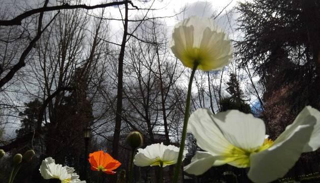 Comparte tu primavera con nosotros y envía tu foto por Whatsapp