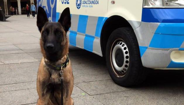 Tyrion, el nuevo perro que ayudará a la Policía Municipal de Pamplona.