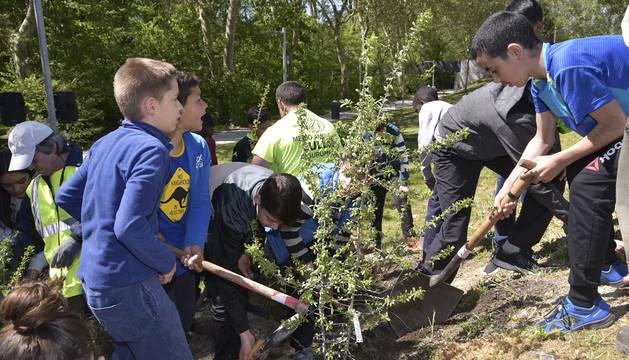 Un momento de la actividad de los escolares del CPEIP Azpilagaña durante la plantación en el Parque fluvial de Pamplona.