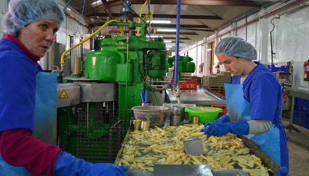 Foto de trabajadoras envasan espárragos en la Cooperativa del Campo de Lodosa