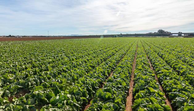 foto de Campos de cultivo cercanos a la nueva planta de Vegetales Línea Verde en Torre-Pacheco (Murcia).