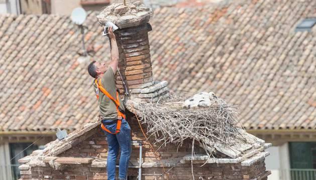 Roberto Iriz, durante la colocación de la cámara junto al nido.